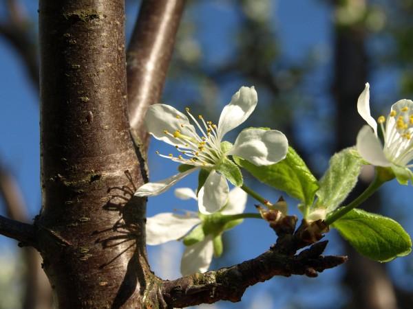 Ogl±dasz fotografie z Mojego Ogrodu Wiosna