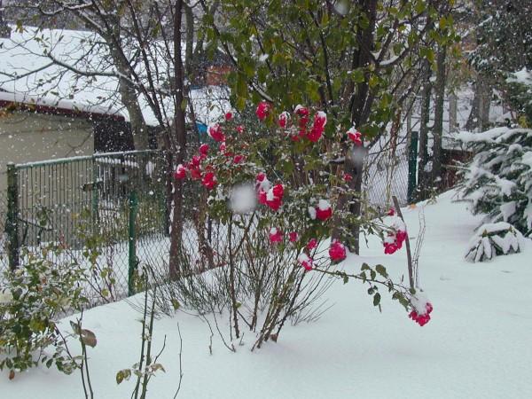 Ogl±dasz fotografie z Mojego Ogrodu Zima